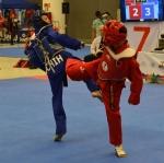 Chihuahua bronce en TeamFive de Tae Kwon Do