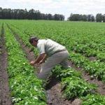 Error disminuir presupuesto para el campo: Librado Tarango